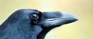 -article-cerveau-des-oiseaux-jpg_3470761_660x281